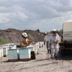 Workers check the bee hives for health