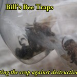 Carpenter Bees are bad!
