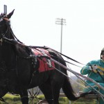 3-year-old trotting filly, Southwind Cocoa comes back to the paddock